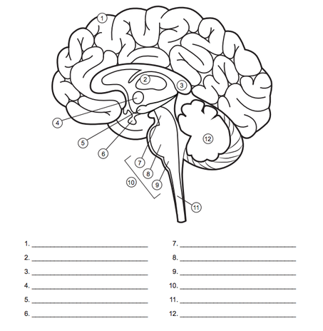 Blank Brain Diagram Ap Psychology Product Wiring Diagrams